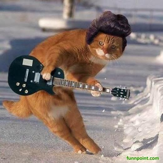 More Cat Christmas Memes