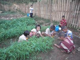 โครงการเกษตรเพื่ออาหารกลางวัน