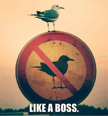 No birds allowed - Like a boss
