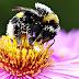 PREOCUPANTE: Casa Branca faz do sumiço de abelhas uma questão de Estado