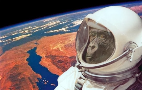 November 2013, Monyet Akan Menjadi Astronot Lagi