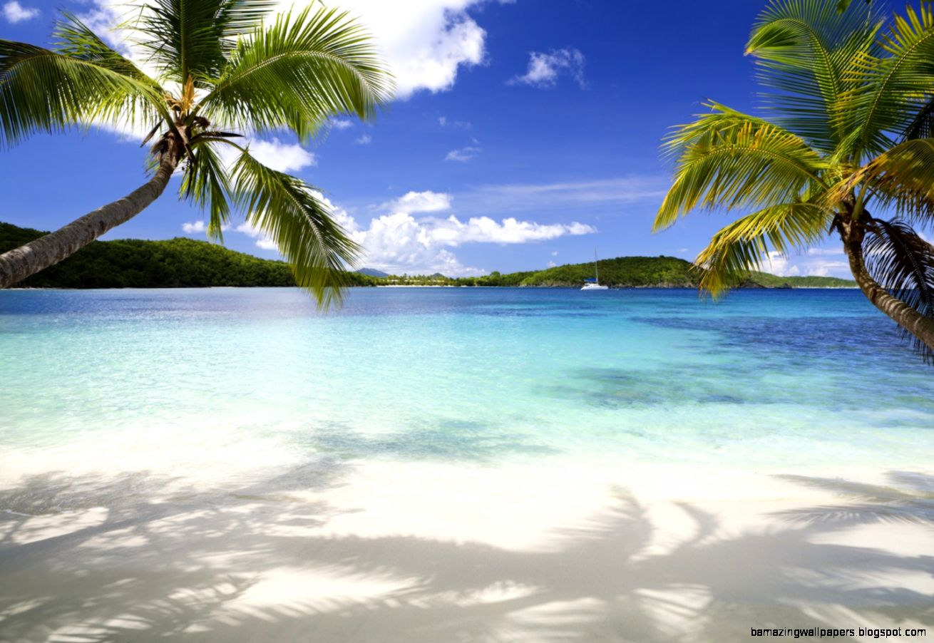 Tropical Background wallpaper  1440x960  75627