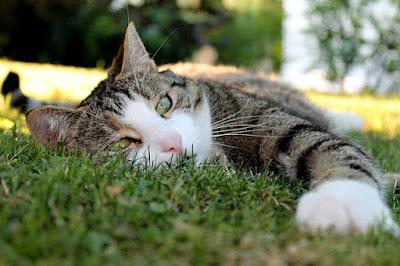 Ilustrasi seekor kucing yang sedang lelah akibat berpikir