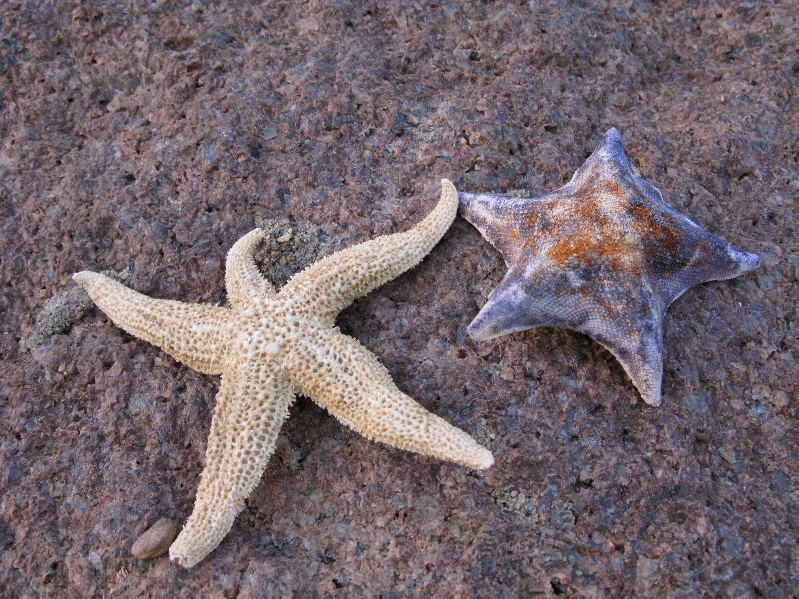 خلفية حيوان نجم البحر الجميلة