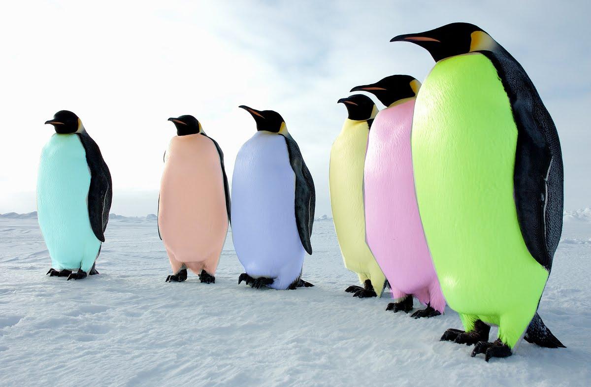 Pide un deseo. - Página 3 Pinguinos%2Bde%2Bcolores