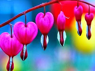 Bunga I Love - pulsk.com