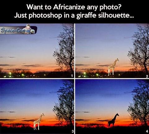 funny giraffe picture humor