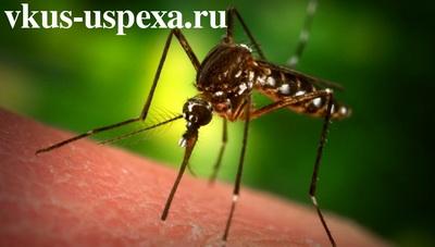 Почему кусают комары, кого чаще кусают комары группа крови, кто кусает комар или самка