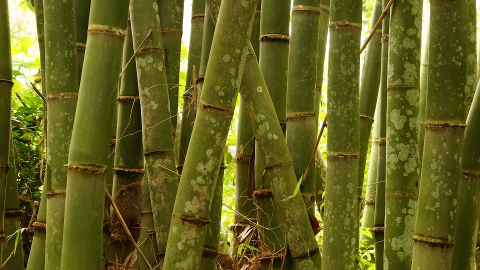 Ilmu Bambu