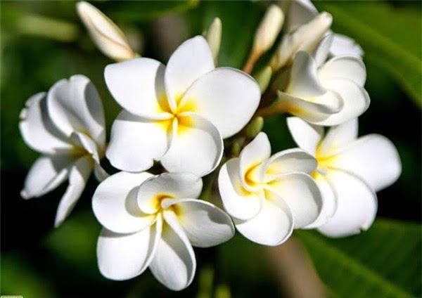 Bí quyết giảm cân an toàn, lâu dài nhờ các loại hoa