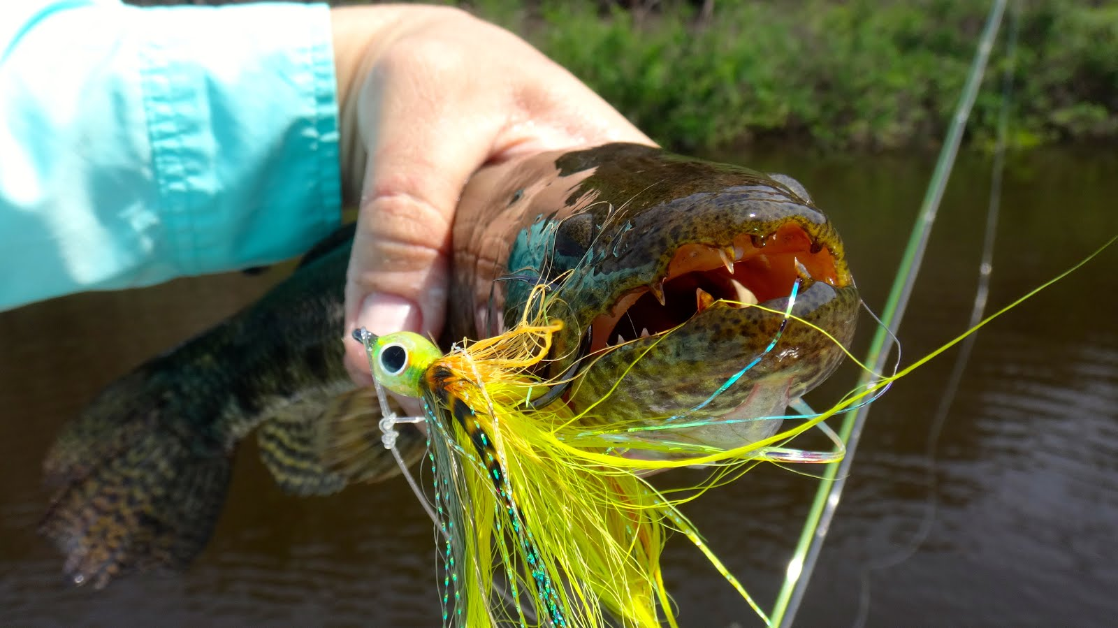 The fly syndicate fly fishing the amazon xeriuni river for Amazon fly fishing