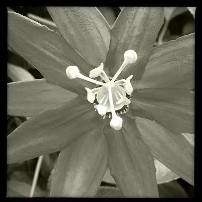 acercamiento de flor