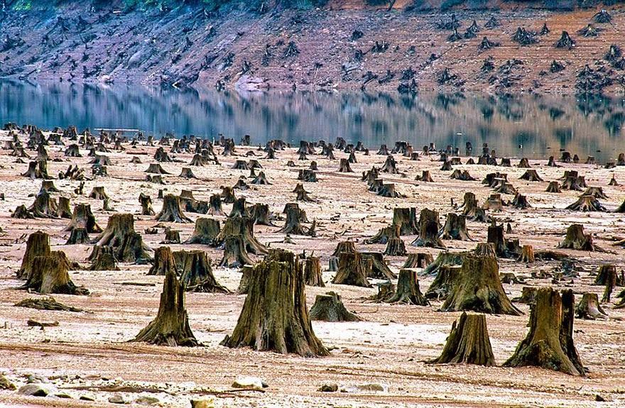 Hutan Nasional Willamette, Oregon (USA). 99% deforestasi