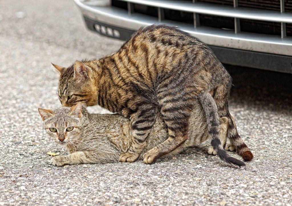 2. The Bridge Suert love animal CT