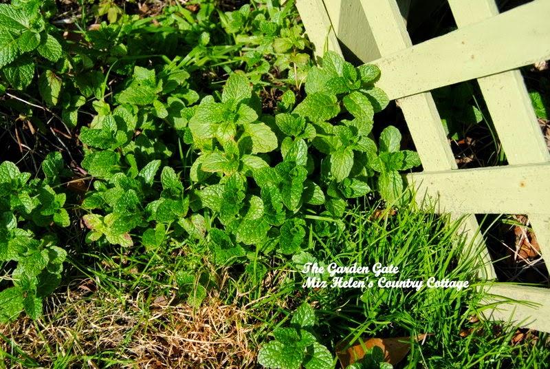 Winter In The Garden at Miz Helen's Country Cottage