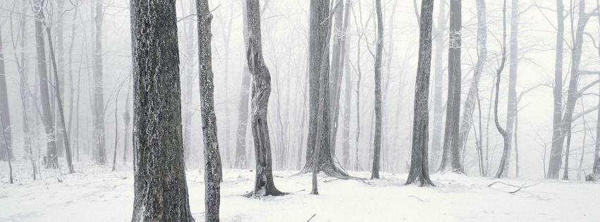 Ormanda kar tutmuş ağaçlar kapak resimleri