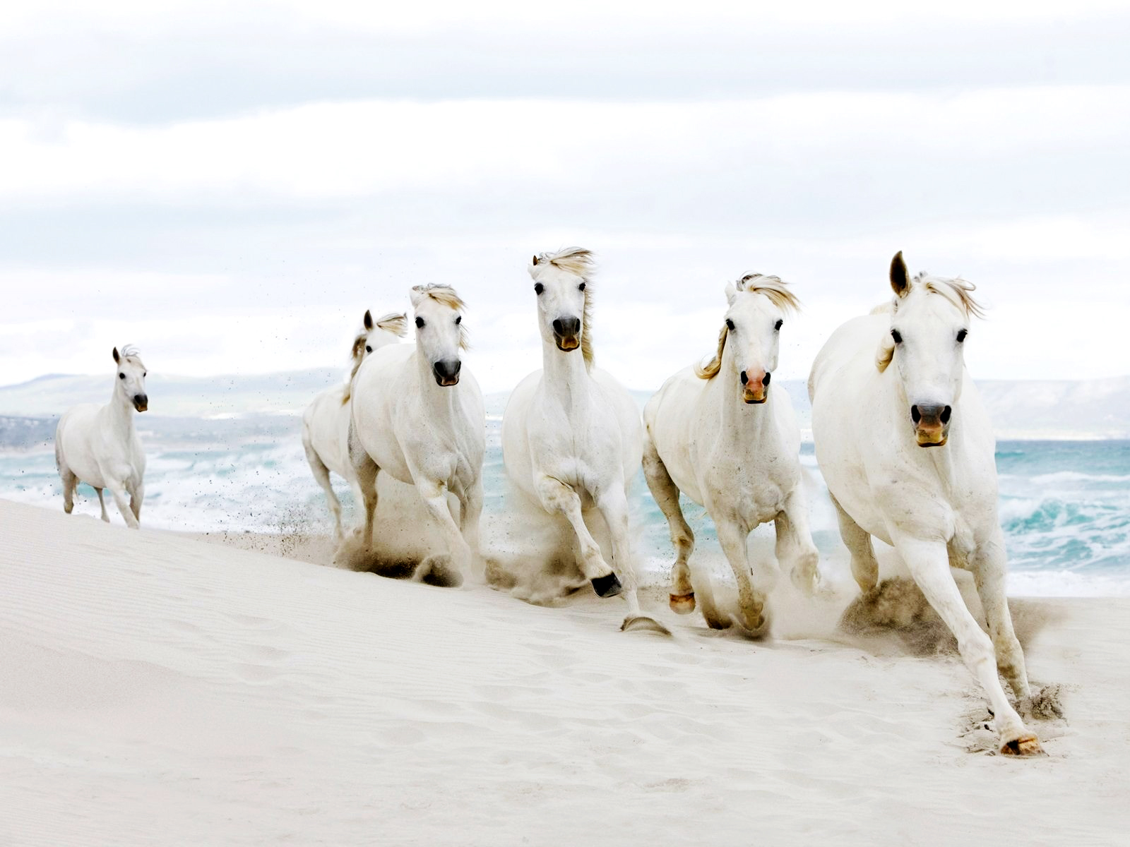 White running horses - photo#7