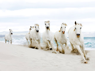 White Horses Running on Beach HD Wallpaper