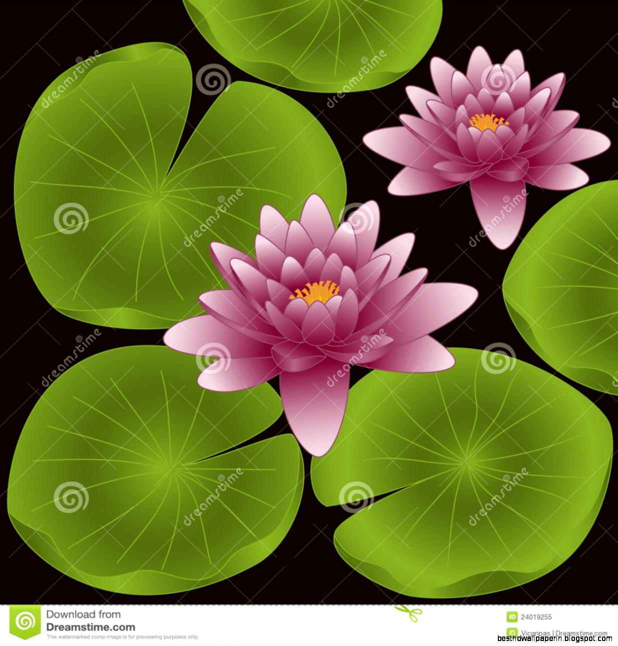 Lotus flower photos free download best hd wallpapers view original size love s first bloom lotus flower mightylinksfo