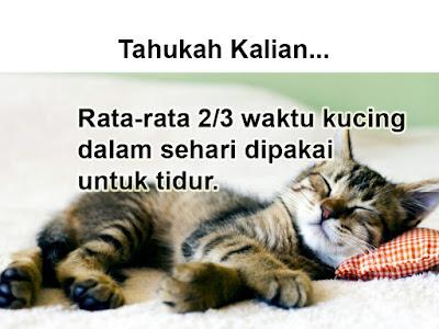 fakta tentang kucing tidur