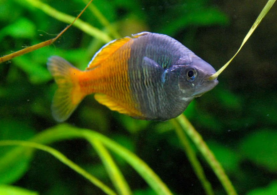 Fishing zone rainbow fish care for Rainbow fish care
