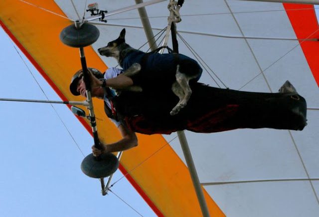 Paragliding Dog