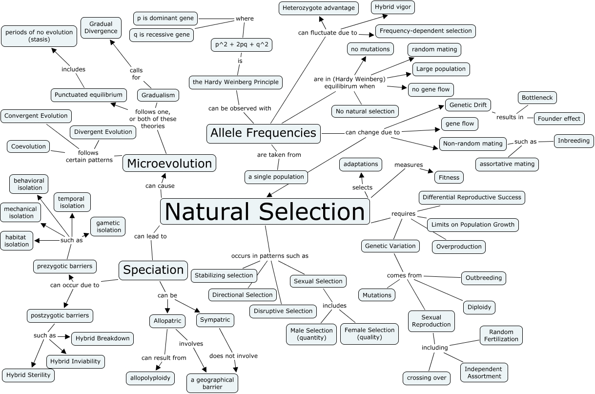 Explain Speciation And Natural Selection