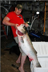 Pending world record striper