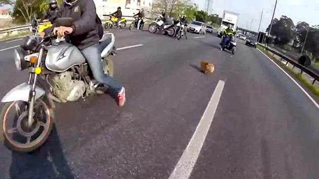 Nature's True Friends: Bikers Block Entire Highway to Save Dog  (Video)