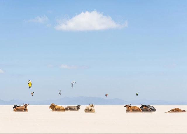 Поощрительные премии категории «Места». «Коровы и воздушные змеи». Эндрю Левер (Andrew Lever).