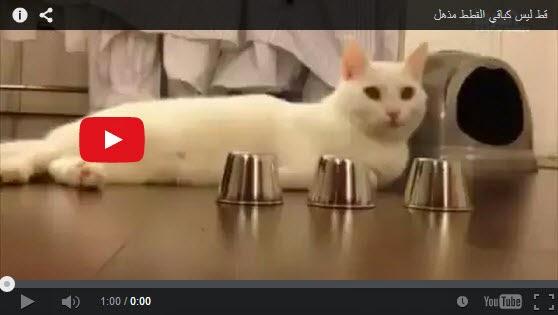 شاهد بالفيديو: قط ذكي جدا ليس كباقي القطط مذهل ما شاء الله !!