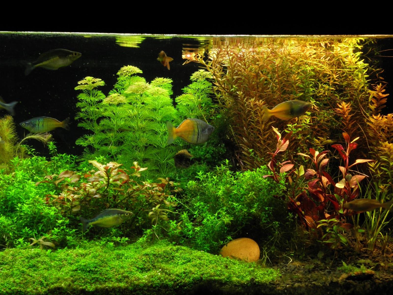 planted aquarium - 240l