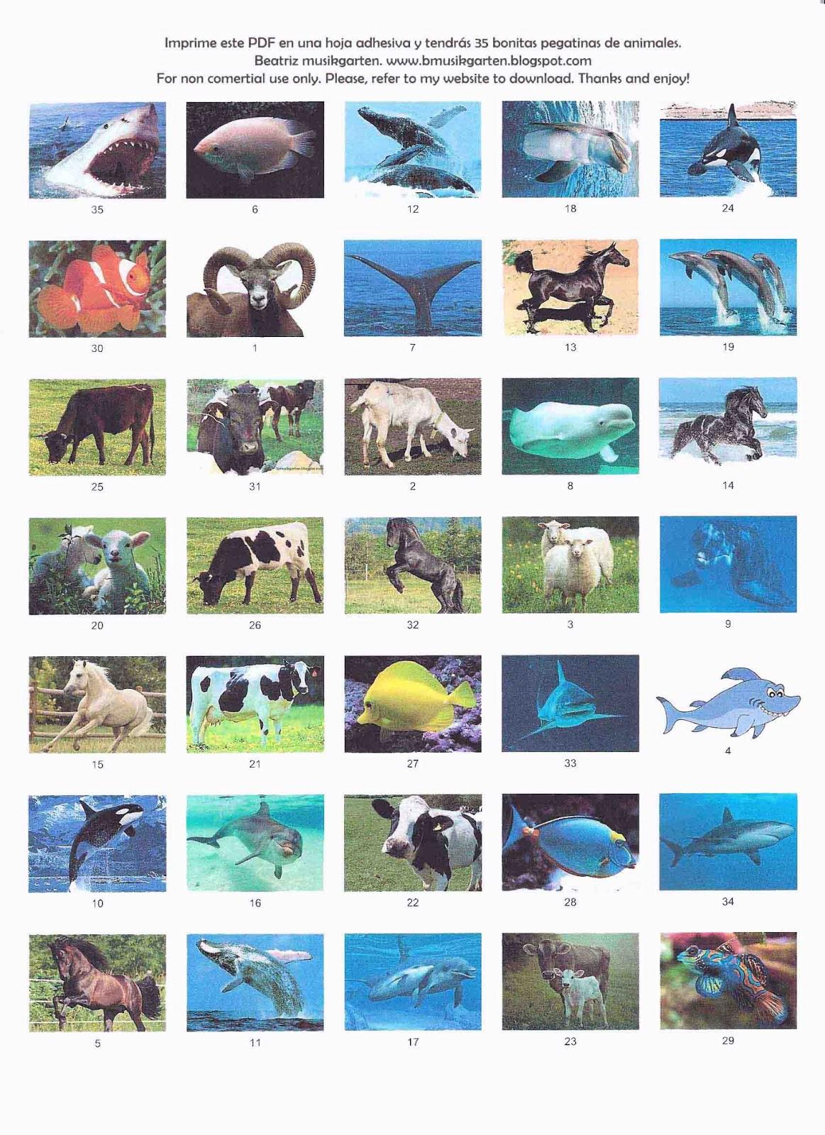 Libro y pegatinas de animales para imprimir PDF   Beatriz musikgarten