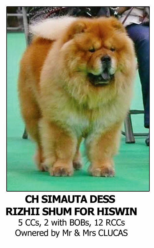 Best Crufts Dog Shampoo for Chow Chow