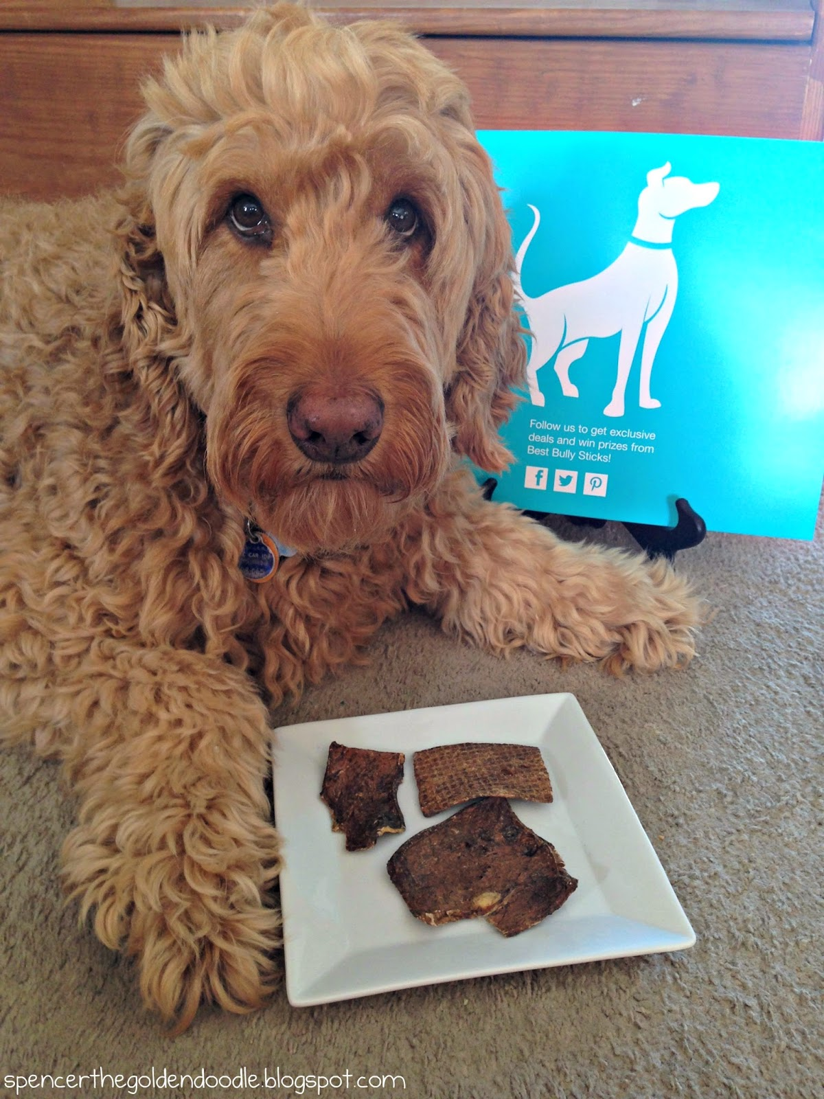 spencer the goldendoodle tt best bully sticks treat review and giveaway. Black Bedroom Furniture Sets. Home Design Ideas
