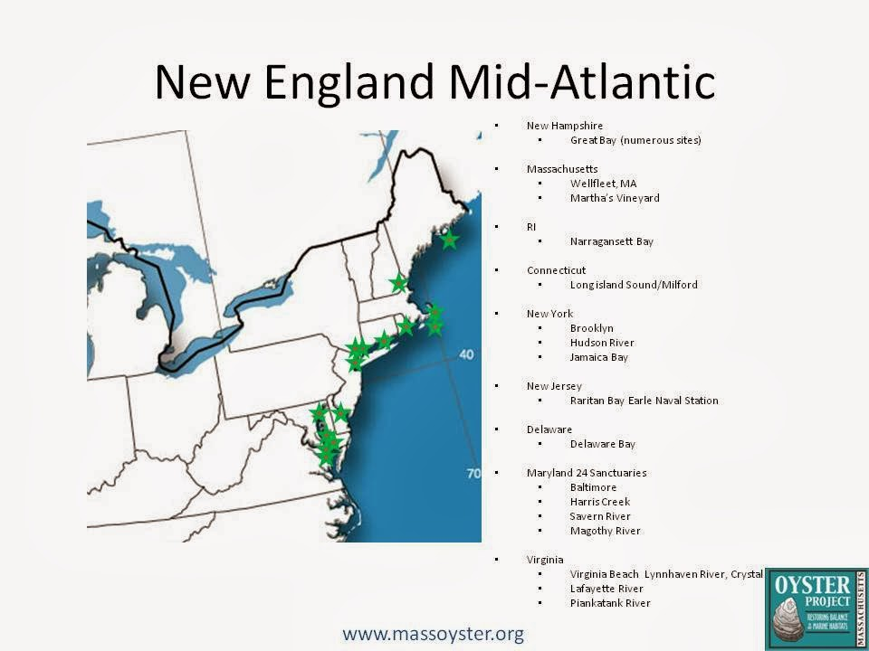Oyster Restoration Map New England and Mid Atlantic