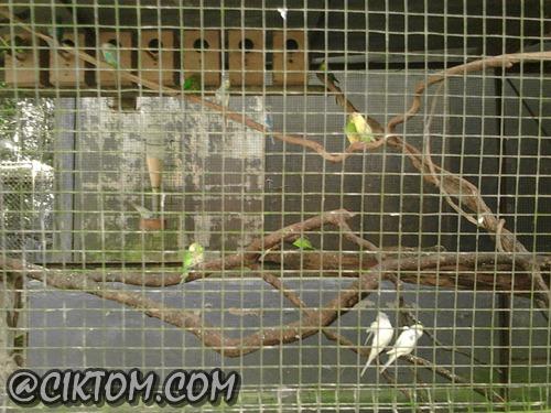 Burung-burung yang comel dan jinak