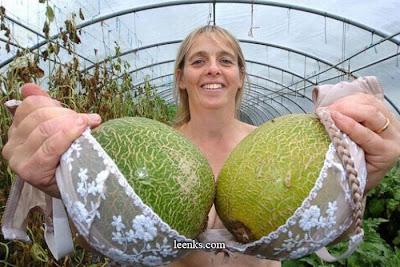 Melon Sebesar Payudara ato Payudara Sebesar Melon
