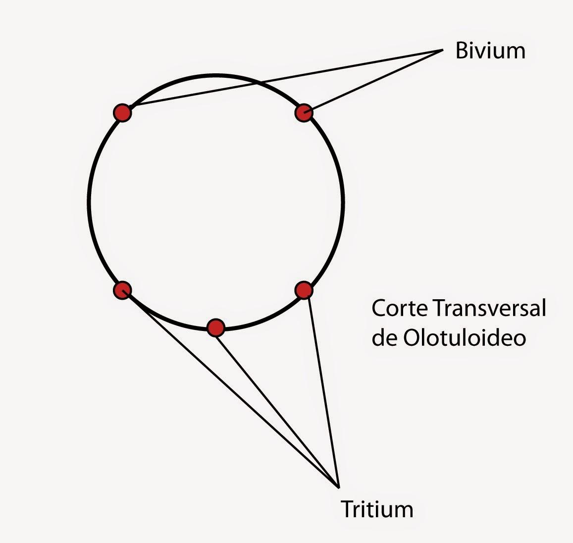 el moderno prometeo: Equinodermos: características generales y ...