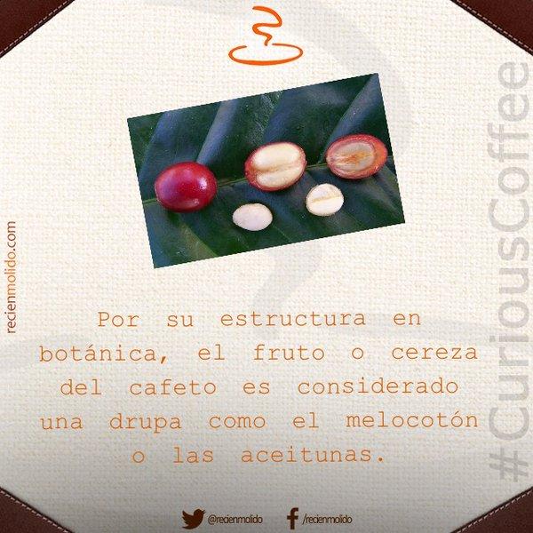 ¿Qué tipo de fruta es el café?