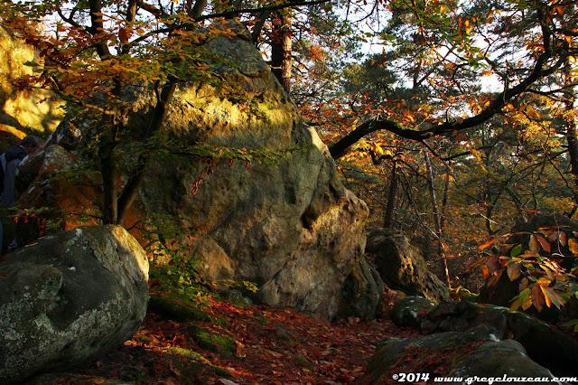 Automne en forêt de Fontainebleau, Rer du Calvaire, (C) 2014 Greg Clouzeau