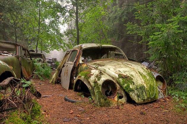 Car-Graveyard-1