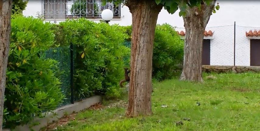Marcellino lo scoiattolino di Marcelli