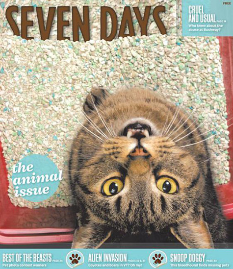 Seven Days Cat Cover