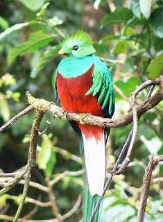 Burung Unik