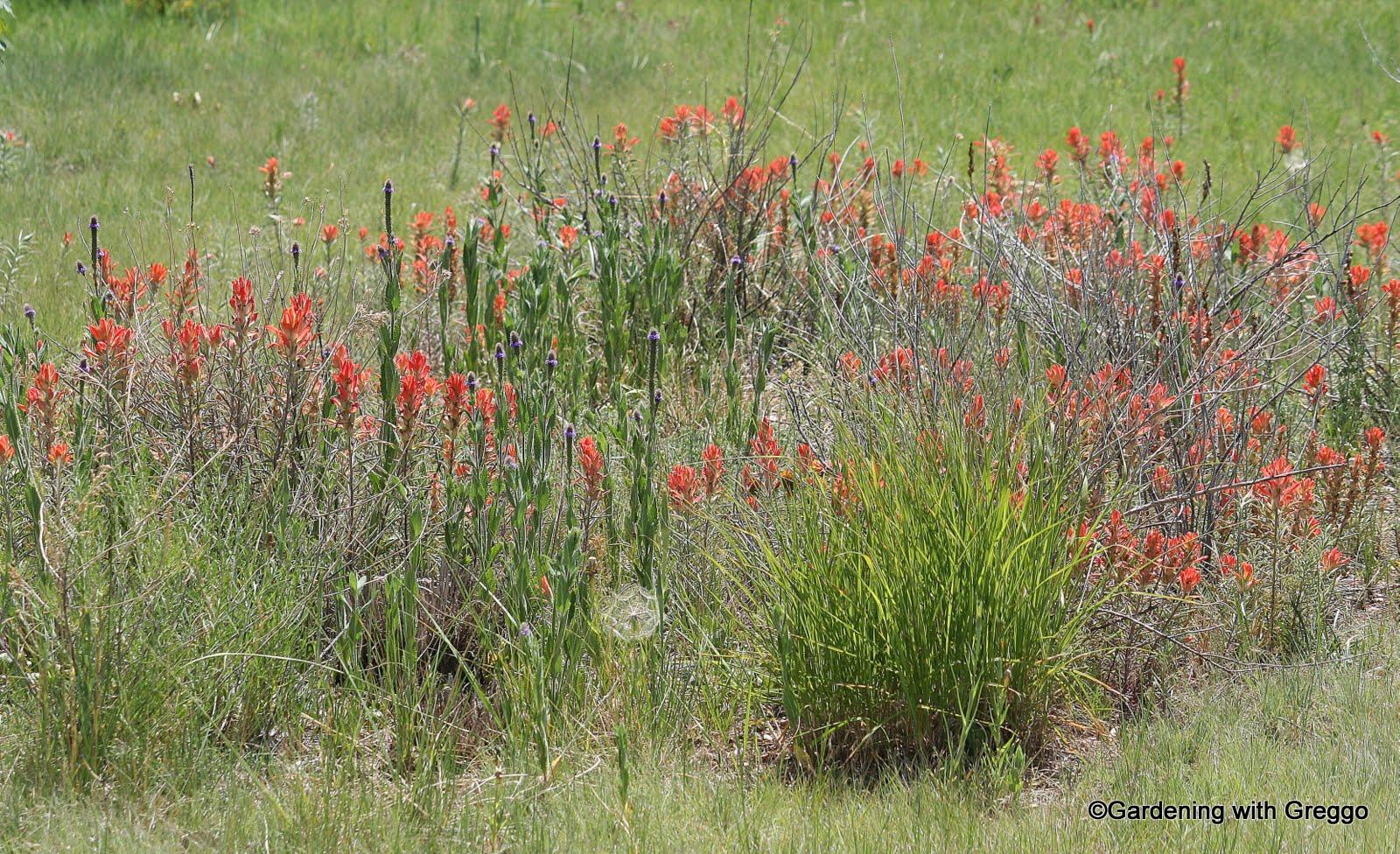 Gardening with Greggo Cheyenne Botanical Gardens