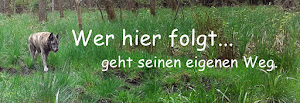 "Blog ""In Sachen Weisheit"""