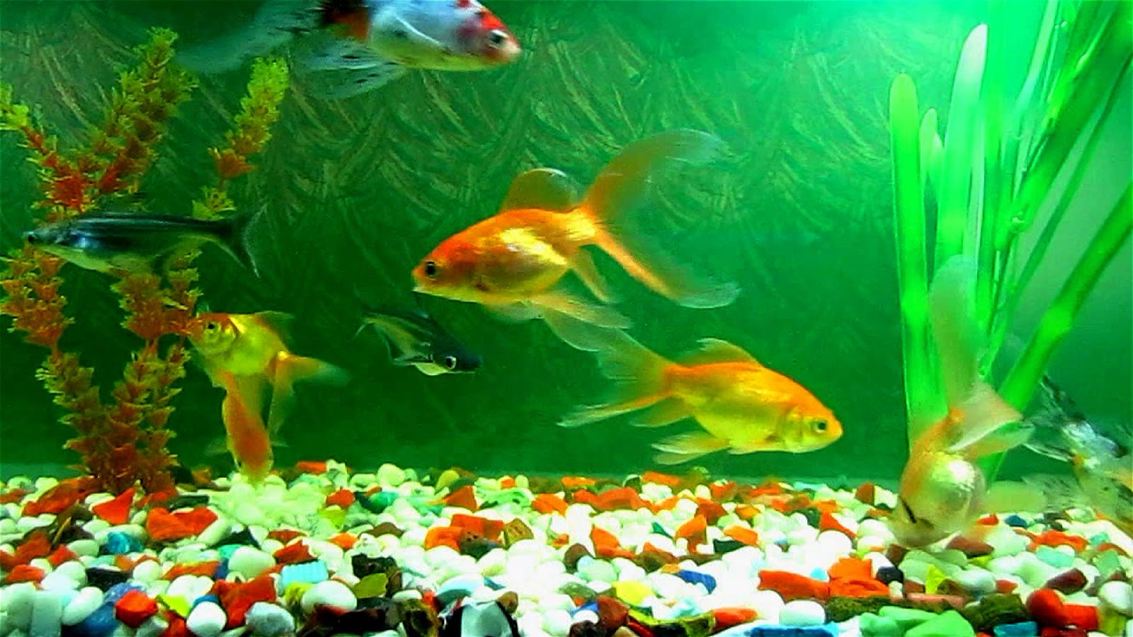 Fish aquarium is good in home - Fish Aquarium A Good Remedial Measure For Vastu Defect