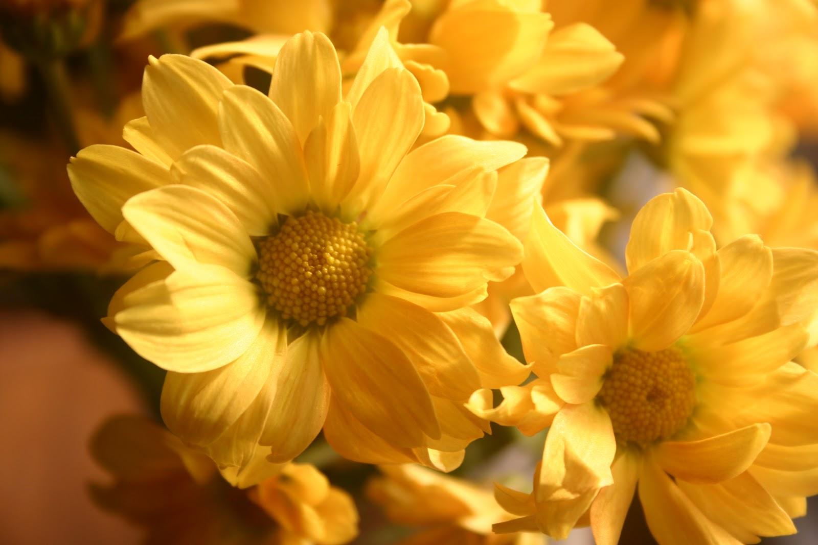 Flowers Of Quiet Happiness Weird Things Cute Kids Summer Ending