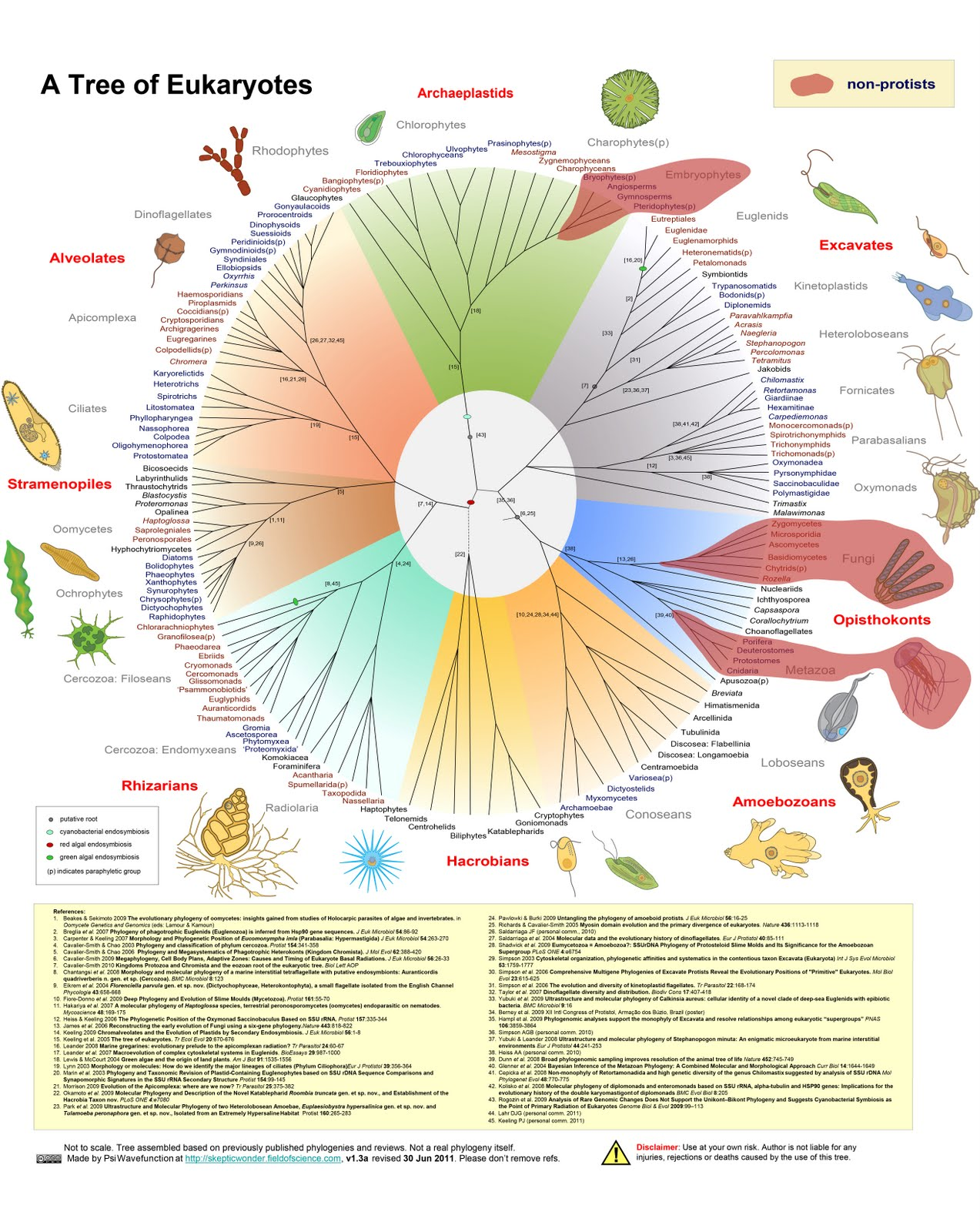Glimpse of eukaryotic diversity: dominated by protists